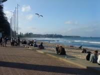 Manly Beach und seine hartgesottenen Surfer
