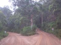 Dschungel-Highway-Autobahnkreuz