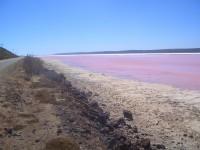 Pink Lake in der Nähe von Kalbarri, ein zuckerlrosa Salzsee. Die Farbe kommt von einer Algenart.